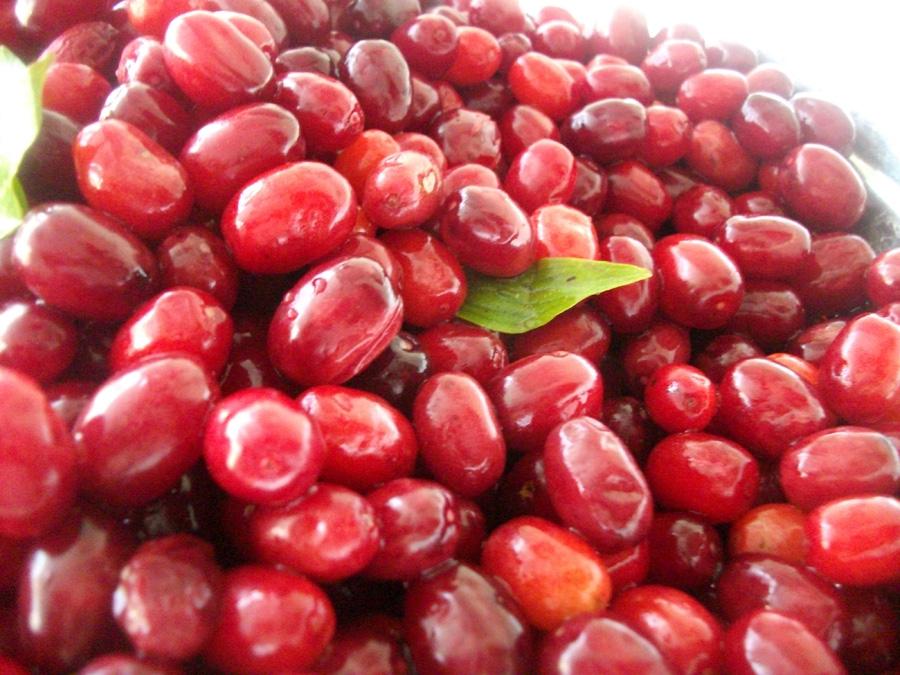 Cranberry_urinery